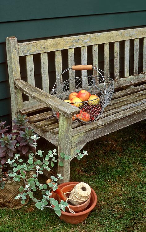 Garden Bench, Basket of heirloom Apples peaches cherries mixed fruit Malus harvest crop, Ball of string twine, licorice plant helichyrsum, charming scene