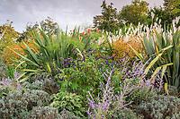 """Festival International des Jardins 2008 à Chaumont-sur-Loire, thème de l'année : """"Des jardins en partage"""".<br /> (ici hors jardins thèmatiques), massif de plantes vivaces en septembre avec, lavandes (défleuries), Perovskia, Phormium, dahlia rouge, Helenium, en fond épis de Miscanthus,...<br /> <br /> Mention obligatoire du Festival des Jardins de Chaumont-sur-Loire."""