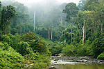 River flowing through lowland rainforest, Danum Valley Conservation Area, Sabah, Borneo, Malaysia