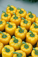 Sweet Bell Peppers, Yellow, in row, picked harvest, probably Gold Standard