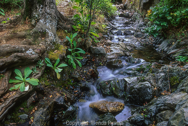 A gently flowing Back Creek, located in Clayton Open Space/Mount Diablo State Park