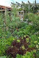Vegetable garden near patio with trellis arbor, lettuces, carrots, herbs, artichokes, wide view scene
