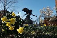 Daffodils with Chapel angel statue.<br />  (photo by Megan Bean / &copy; Mississippi State University)