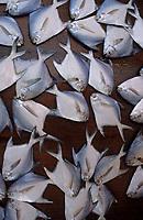 Asie/Malaisie/Bornéo/Sarawak/Kuching: Etal de poisson sur le marché