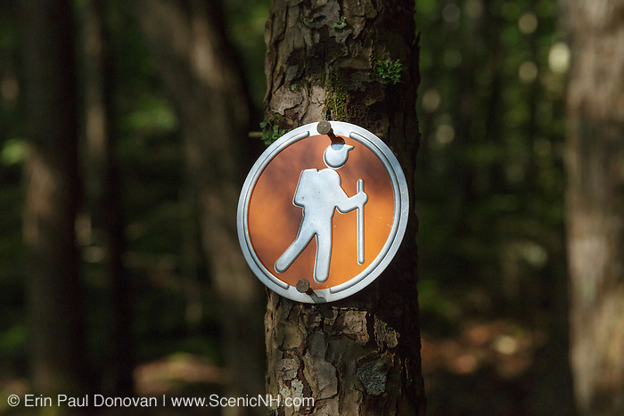Trail marker along a trail at Unsworth Preserve in Moultonborough, New Hampshire during the summer months. The preserve is owned and managed by the Squam Lakes Conservation Society.