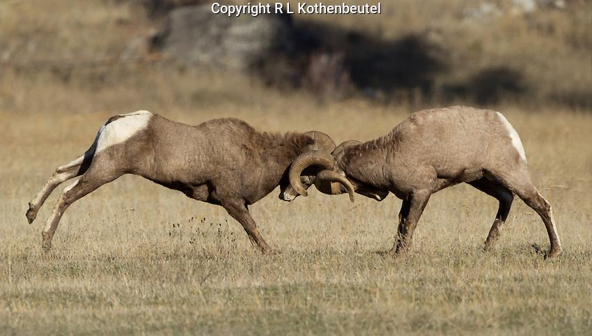 Near Plains, Montana<br /> 11/16/2014