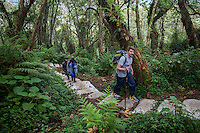Trekkers hike through the beautiful jungle of Mount Bisoke in the Virunga Mountain of Rwanda on their way to see mountain gorillas.