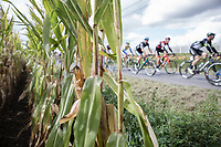 Peloton riding along the corn fields.<br />