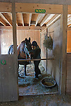 Waco Hanover, 36-year-old Standardbred gelding