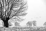 Europa, DEU, Deutschland, Nordrhein Westfalen, NRW, Rheinland, Niederrhein, Voerde, Naturschutzgebiet Momm-Niederung, Winter, Schnee, Typische Kopfweide, Kategorien und Themen, Natur, Umwelt, Landschaft, Jahreszeiten, Stimmungen, Landschaftsfotografie, Landschaften, Landschaftsphoto, Landschaftsphotographie, Naturschutz, Naturschutzgebiete, Landschaftsschutz, Biotop, Biotope, Landschaftsschutzgebiete, Landschaftsschutzgebiet, Oekologie, Oekologisch, Typisch, Landschaftstypisch, Landschaftspflege<br /> <br /> [Fuer die Nutzung gelten die jeweils gueltigen Allgemeinen Liefer-und Geschaeftsbedingungen. Nutzung nur gegen Verwendungsmeldung und Nachweis. Download der AGB unter http://www.image-box.com oder werden auf Anfrage zugesendet. Freigabe ist vorher erforderlich. Jede Nutzung des Fotos ist honorarpflichtig gemaess derzeit gueltiger MFM Liste - Kontakt, Uwe Schmid-Fotografie, Duisburg, Tel. (+49).2065.677997, <br /> archiv@image-box.com, www.image-box.com]