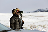USA, Wyoming, Yellowstone National Park, wolf-watcher spotting a wolf pack on the Blacktail Deer Plateau