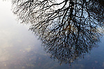 Winter Tree Reflected in Guisecliff Tarn near Pateley Bridge North Yorkshire England