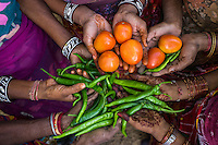 A group of women who are a part of Technoserve's kitchen garden program, hold their harvests in a kitchen garden in Bamanwali village, Bikaner, Rajasthan, India on October 24th, 2016. Non-profit organisation Technoserve works with guar farmer's wives in Bikaner, providing technical support and training for edible gardening, to improve the nutritional quality of their food and relieve financial stress on farming communities. Photograph by Suzanne Lee