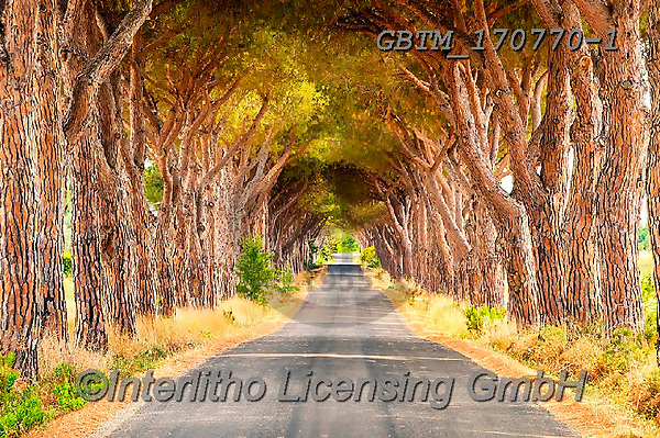 Tom Mackie, LANDSCAPES, LANDSCHAFTEN, PAISAJES, photos,+Europa, Europe, European, Italia, Italian, Italy, Tom Mackie, Toscana, Tuscan, Tuscany, country lane, horizontal, horizontals+, path, pathways, pattern, patterns, pine tree, pine trees, road, track, umbrella,Europa, Europe, European, Italia, Italian,+Italy, Tom Mackie, Toscana, Tuscan, Tuscany, country lane, horizontal, horizontals, path, pathways, pattern, patterns, pine t+ree, pine trees, road, track, umbrella+,GBTM170770-1,#l#, EVERYDAY
