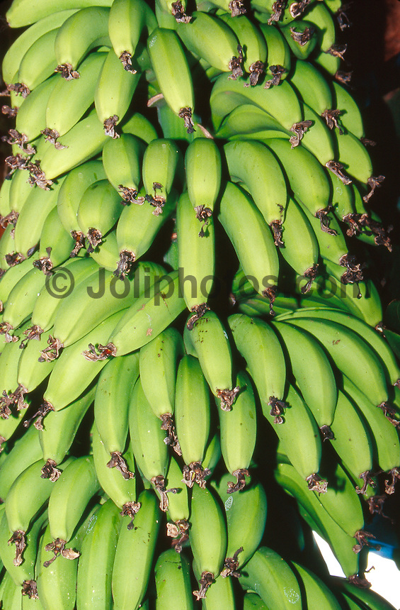 Bananas on North Shore, Hawaii..photo:  joliphotos.com