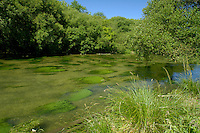 Chalk Stream, River Itchen, Hampshire, UK