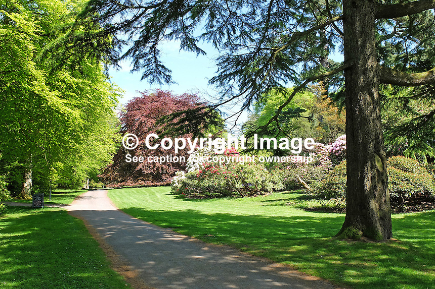 National Trust, Rowallane, Saintfield, N Ireland, UK, parkland, May, 2015, 201405231073<br /> <br /> Copyright Image from Victor Patterson, 54 Dorchester Park, Belfast, UK, BT9 6RJ<br /> <br /> t: +44 28 9066 1296<br /> m: +44 7802 353836<br /> vm +44 20 8816 7153<br /> <br /> e1: victorpatterson@me.com<br /> e2: victorpatterson@gmail.com<br /> <br /> www.victorpatterson.com<br /> <br /> IMPORTANT: Please see my Terms and Conditions of Use at www.victorpatterson.com