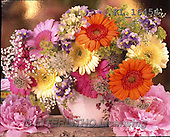 Interlitho, FLOWERS, BLUMEN, FLORES, photos+++++,flowers,gerbera,KL16454,#F#