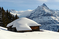 Swiss chalet on the Busalp tobogan slopes - near Grindelwald - Swiss Alps - Switzerland