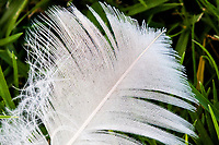 A white feather lying on green grass.