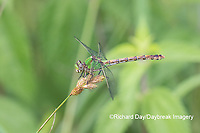 06468-00110 Westfall's Snaketail (Ophiogomphus westfalli) Centerville Slough fen Reynolds Co. MO