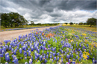 Along a lonely stretch of highway north of Mason, Texas, I had to pull over and capture this scene of Texas Wildflowers, primarily for the bluebonnet pictures that I knew would come from this landscape. In the 20 or so minutes I was there, I never saw another car. The afternoon clouds were looming as if rain were coming, but that never materialized. In this image of Texas Wildflowers, i love the mix of bluebonnets, Indian paintbrush, pink phlox, and golden bitterweed. I hope to come back here this spring if the rains and weather cooperate in making this another colorful spring.