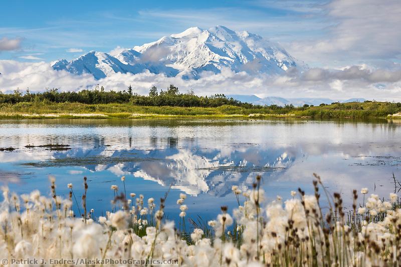 Alaska cotton grass around a tundra pond with the mountain reflection of Denali, North America's tallest mountain. Denali National Park