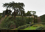 Monte alla Croci Cypress San Miniato al Monte Florence