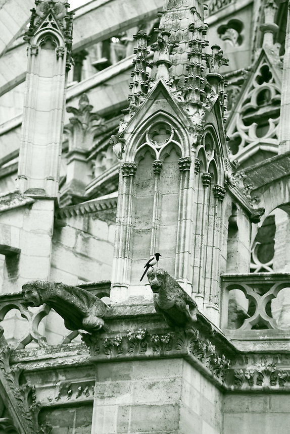 A particular of the back of the church of Notre Dame in Paris, with its typical gothic architecture: there is a magpie resting on a gargoyle, in the center of the picture (black & white). Digitally Improved Photo.