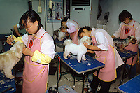 Korea. South Korea. Seoul. Korea pet beauty school. Private school with a monthly tuition to pay in order to learn about dogs . Students are learning how to take care and make dogs beautiful. Hair cut for some pedigree dogs (lapdog)  Dog perceived as friendly companionship.                           © 2002 Didier Ruef