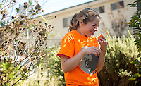 A student tastes a sour orange after trimming an orange tree at Solano Canyon Community Garden in Los Angeles.<br />