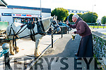 Blessing of the Jarveys in Killarney last Saturday afternoon. Pictured Fr Lars blessing the horses.