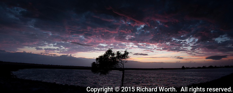 Red tinged sunset clouds with a lone tree in silhouette.