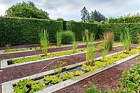 France, Loir-et-Cher (41), Cheverny, château de Cheverny, le jardin bouquetier, bassins avec  laitue d'eau ( Pistia stratiotes ), massettes...