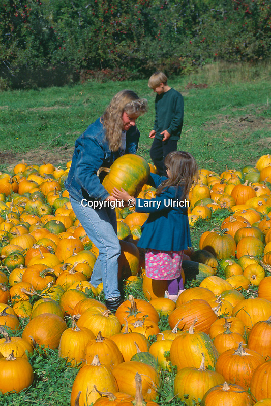 Picking the right pumpkin<br />