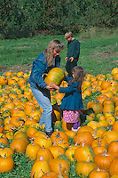 Picking the right pumpkin<br />   for Halloween<br /> Merimack County<br /> New Hampshire