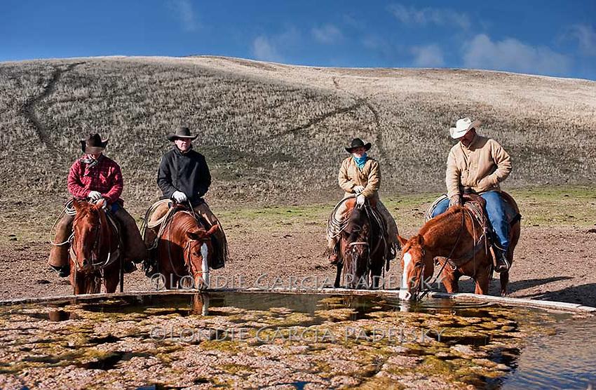 Cold winter morning, cowboys at water trough. Spring Ranch at Shandon, California