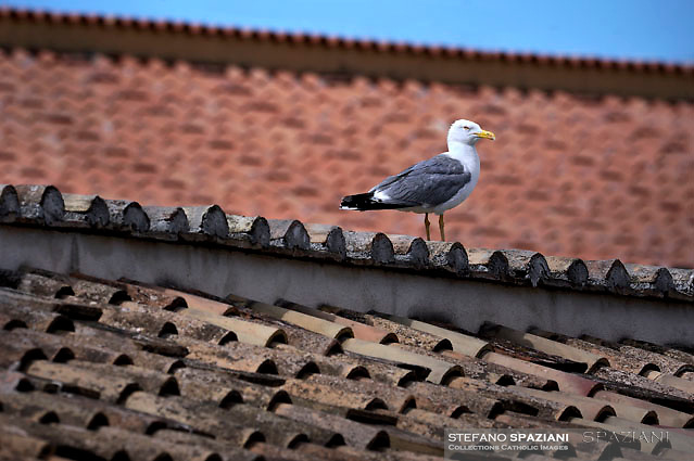 Seagull, colonnade  St.Peter's square at the Vatican.Pope Francis Solemnity of St Peter and Paul in St.Peter's square at the Vatican.June 29, 2017.