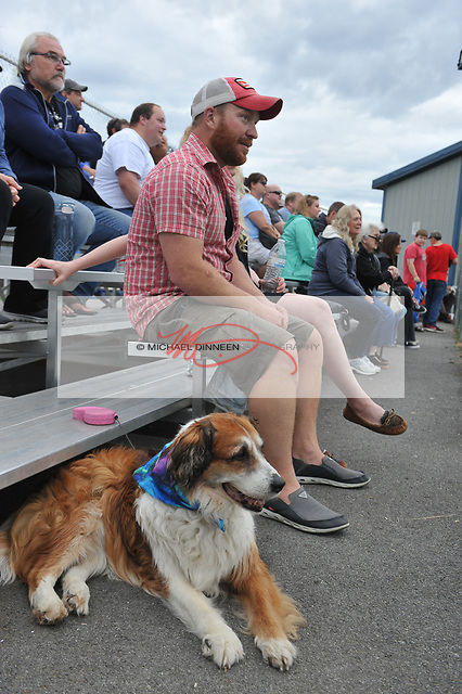 3586 Brittany, a border collie belonging to Andy Miller, enjoys the Chinooks'  final game of the season.  Photo for the Star by  Michael Dinneen