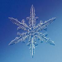 Snowflake Kraz - Stellar Dendrite