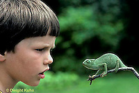 CH26-061z  African Chameleon -child staring at chameleon, chameleon staring back - Chameleo senegalensis