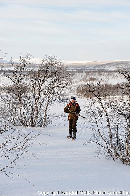 Dame på ski jakter rype med hagle. ---- Woman hunting grouse.
