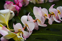 Tropical Hawaiian plumeria flower lei