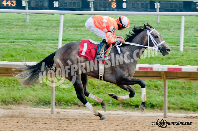 Patriots Dream winning at Delaware Park on 8/24/2013