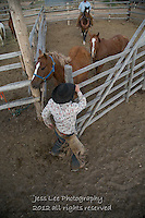 Coming out Cowboys working and playing. Cowboy Cowboy Photo Cowboy, Cowboy and Cowgirl photographs of western ranches working with horses and cattle by western cowboy photographer Jess Lee. Photographing ranches big and small in Wyoming,Montana,Idaho,Oregon,Colorado,Nevada,Arizona,Utah,New Mexico.