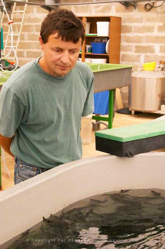 """The manager of the fish farm breeding sturgeons  """"Caviar et Prestige"""" Saint Sulpice et Cameyrac  Entre-deux-Mers  Bordeaux Gironde Aquitaine France - at Caviar et Prestige"""