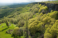 Lush forest growing near rock formations, Mirabel Village, Ardeche, France.