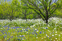 Wildflowers and Trees in Texas