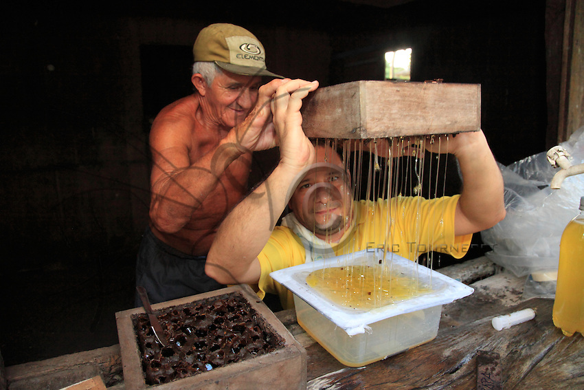 Brazil, State of Pará, near Bragança. Mr. Roque, 68 years old and a beekeeping farmer, with Professor Giorgio Venturieri harvesting together the honey from a hive.