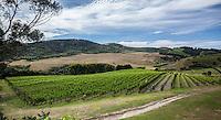 It is well worth visiting the vineyard restaurants on Waiheke Island. (Photo by Travel Photographer Matt Considine)